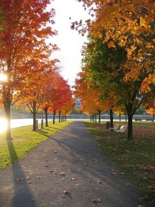 montreal-foliage1