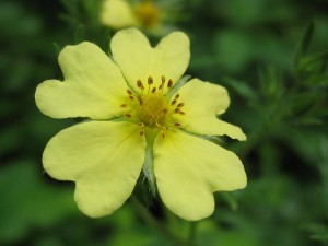 mystery-flower-10