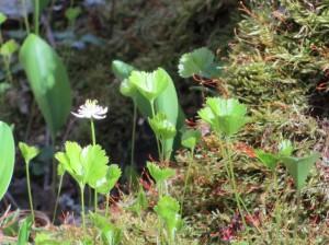 Mystery Flower 14S
