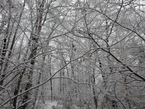 Snow Walk 3