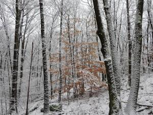 Snow Walk 4.5