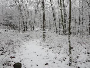 Snow Walk 5