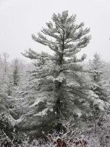 Snow Walk 6