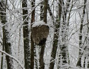 Snow Walk 8