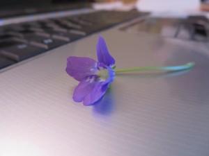 September Violet