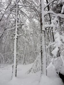 snowentrance