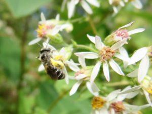 big-pollen-baskets